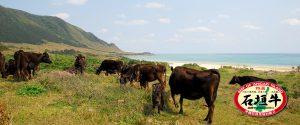 石垣牛の群れ